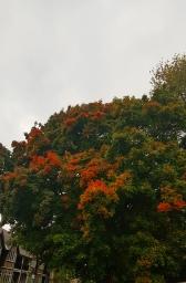 001_Hull_trees